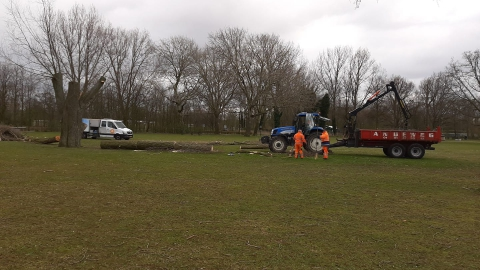 Zwakke boom gerooid in Beatrixpark